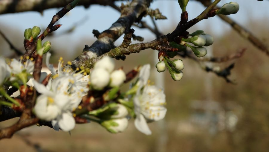Borgeons au printemps